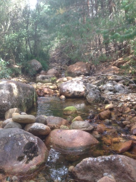 Annys Adventures Blog - Guasca